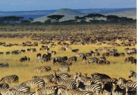 budget reis afrika