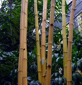 bamboestok